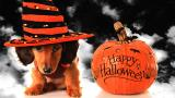 Dress Up Your Pet for Halloween!